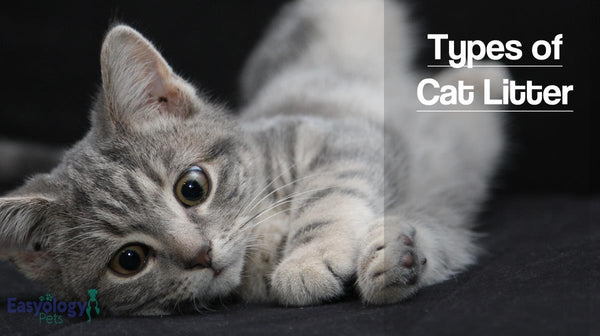 Warning: Don't Buy Cat Litter without Reading This