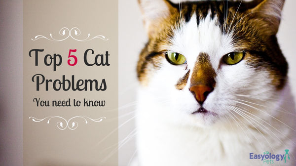 Top 5 Cat Problems You Need to Know