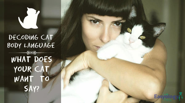 Decoding Cat Body Language – What Does Your Cat Wants to Say?