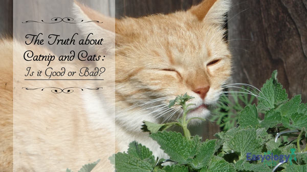 The Truth about Catnip and Cats: Is It Good or Bad?