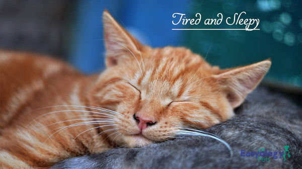 If Eaten, Catnip Makes Cats Tired and Sleepy