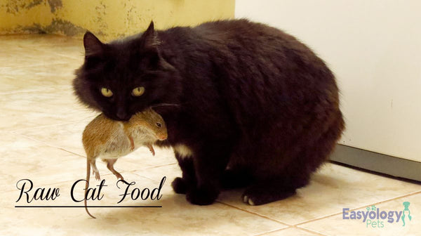 Raw Cat Diet Pros and Cons