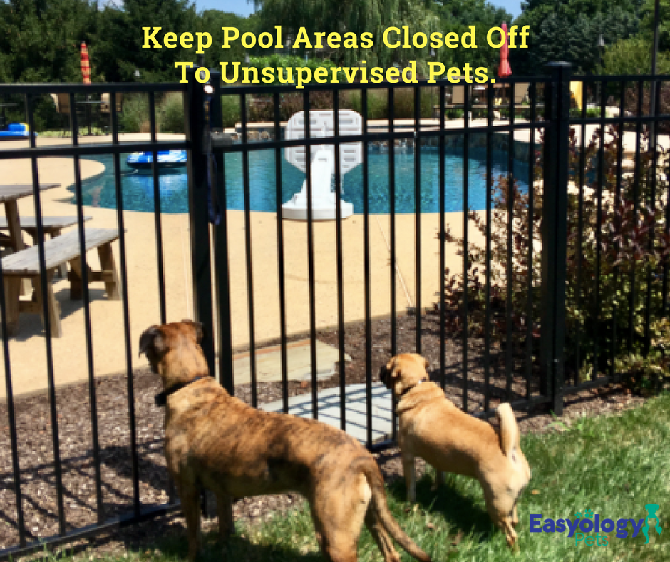 Keep pool areas closed off to unsupervised pets