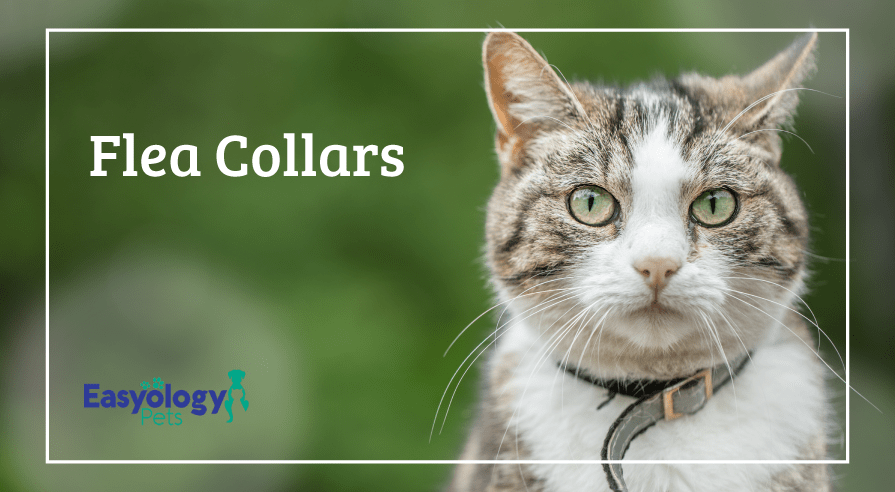 Flea Collars for Cats