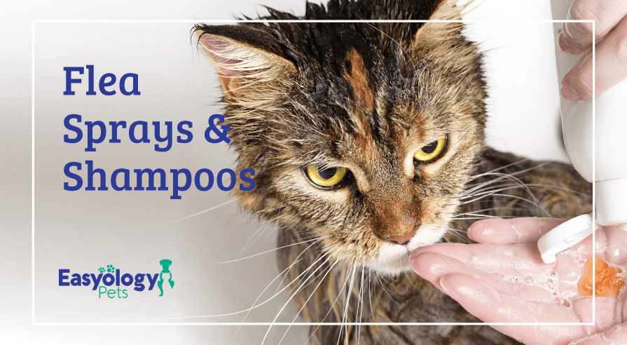 Flea Sprays and Shampoos for Cats