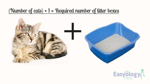 The Golden Ratio of Cat and Litter Boxes