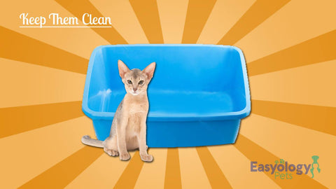 Don't Skip on the Litter Box Cleaning
