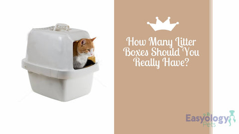 How Many Litter Boxes Should You Really Have?