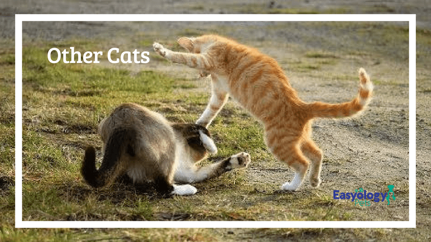 Other Cats - Cat Fights