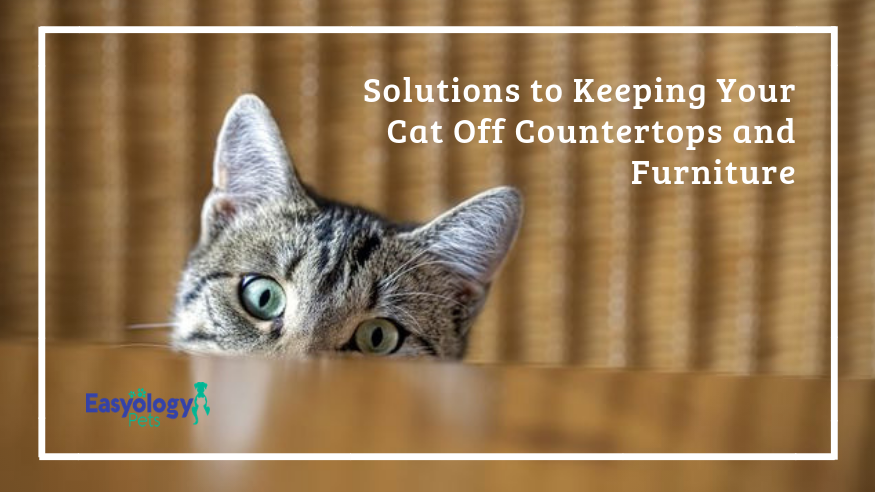Solutions to Keeping Your Cats Off Countertops and Furniture