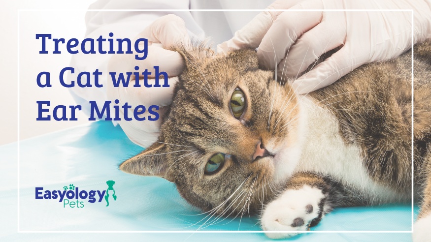 Treating a Cat with Ear Mites