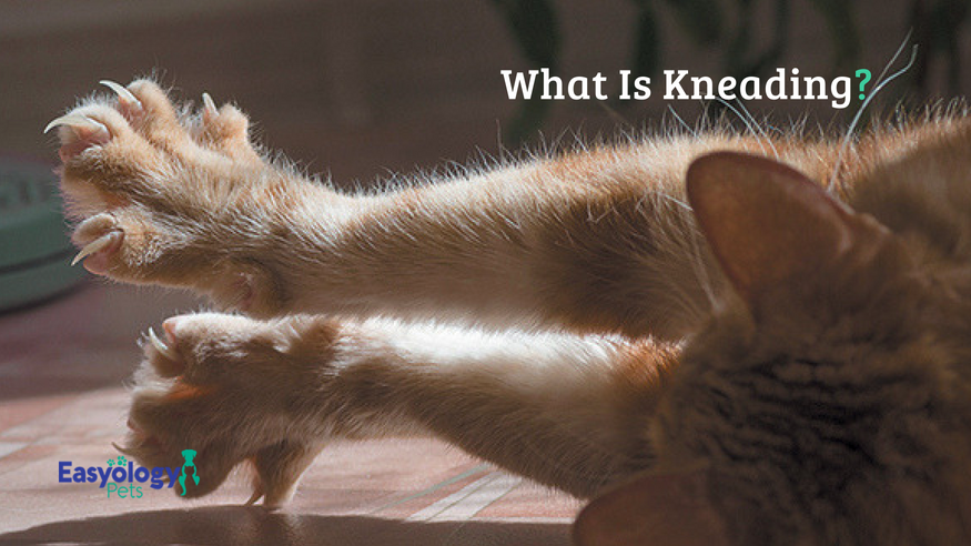 What Is Kneading?