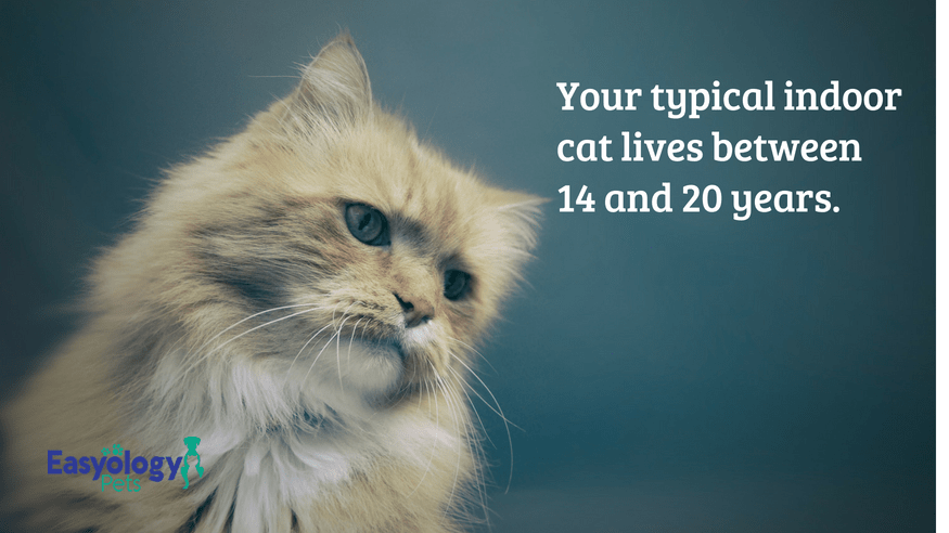 Your Typical Indoor Cat Lives 14 to 20 Years