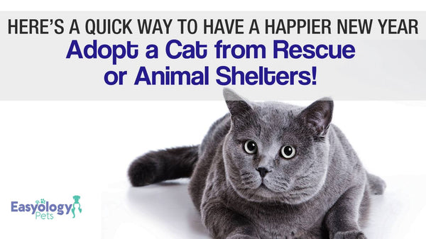 Here's a Quick Way to Have a Happier New Year – Adopt a Cat from Rescue or Animal Shelters!