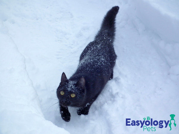 Winter Will Come: Is Your Cat Ready?