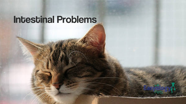Cat Intestinal Problems