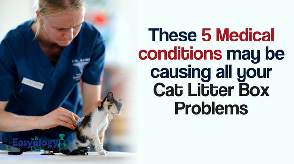 These 5 Medical Conditions May Be Causing All Your Cat Litter Box Problems