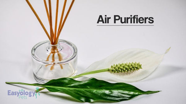 Use Air Purifiers to Eliminate Cat Litter Odor
