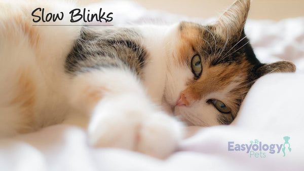 "Slow Blinks Are Cats' Favorite Way of Saying ""I Love You"""