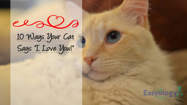 "Give Me Some Cat Love: 10 Ways Your Cat Says ""I Love You!"""