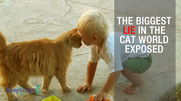 The Biggest Lie in the Cat World Exposed - You Can't Teach Your Cat Tricks