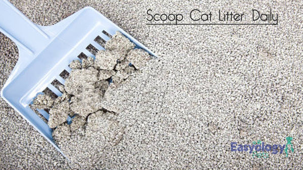 Scoop Litter Daily to Avoid Unwanted Odors and Maintain Your Cat's Good Health