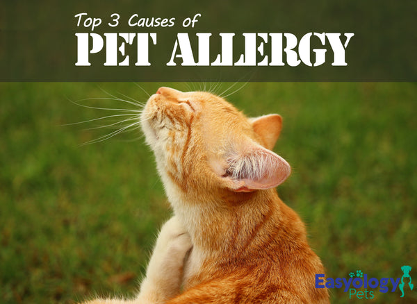 Top 3 Causes of Pet Allergy