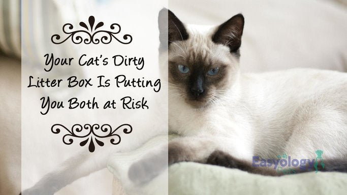 The Risks of a Dirty Litter Box