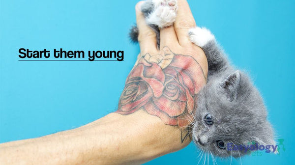 Young Cats Learn Tricks Faster