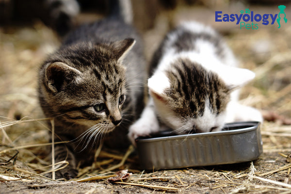 A Late-Night Meal Will Keep Your Cat Happy Through the Night