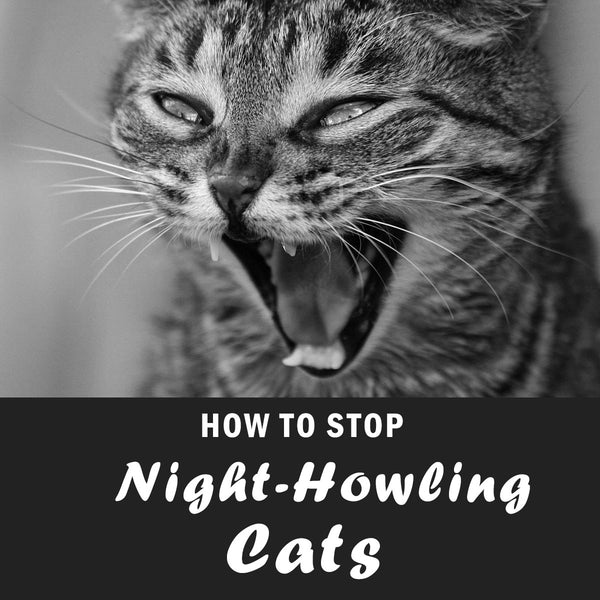 How to Stop Cats from Howling at Night