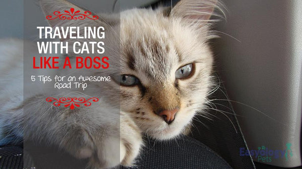 Traveling with Cats Like a Boss – 5 Tips for an Awesome Road Trip