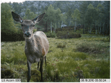 Hunting Game Camera Sample Photo