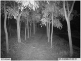 Hunting Game Camera Nightvision Video