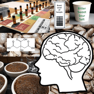 Learn Sensory Analysis and Cupping