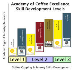 Academy of Coffee Excellence Cupping Skills Development