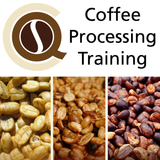 CQI Coffee Processing Level 1 Course