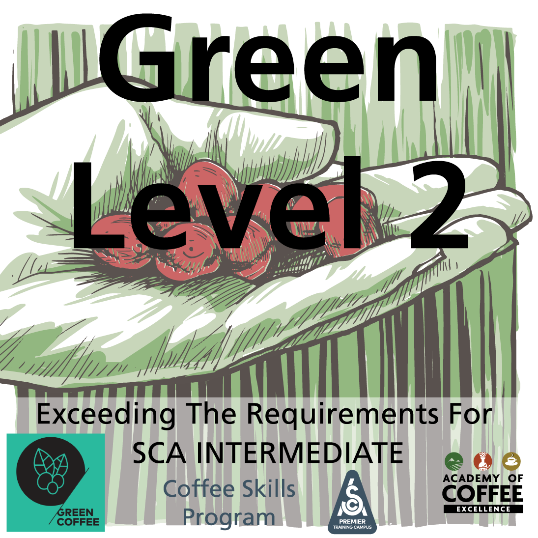 Green Coffee Level 2