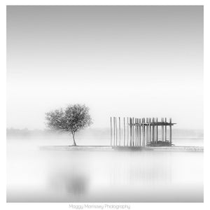 'The Water Tree' Calming Lake Photography Print