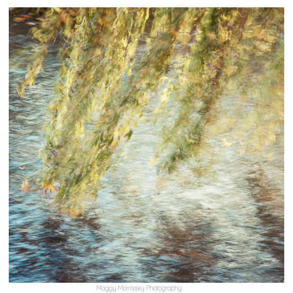 'Willow' Abstract Art Print Photography