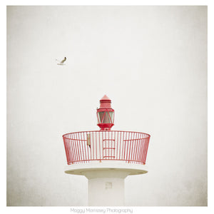 'Soaring Wild And Free' Howth Wall Art Photograph