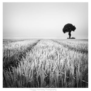 'The Wheat Field' Wall Art Print