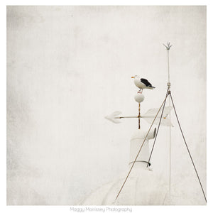 'The Zen Seagull' Coastal Wall Art