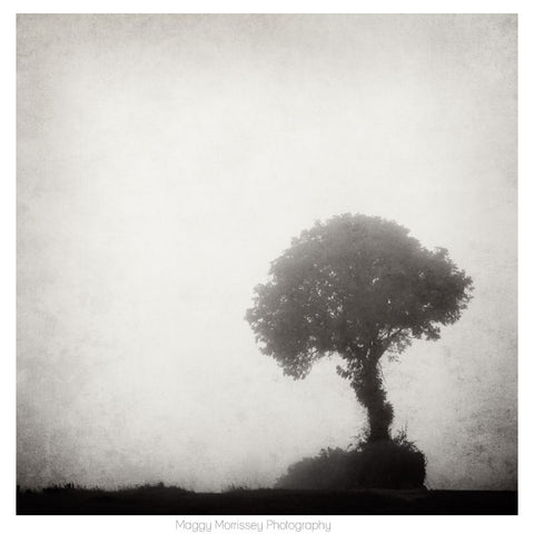 'The Solitary Tree' Wall Art Prints