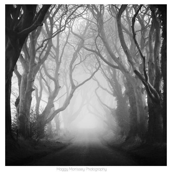 'Enchanted Forest' Dark Hedges Wall Art Print