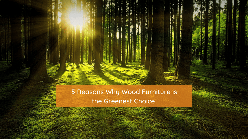 Say No to Plastic and Metal; Turn to Wood to Save the Planet