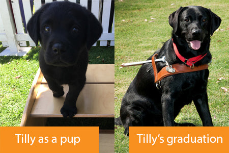 Tilly before and after