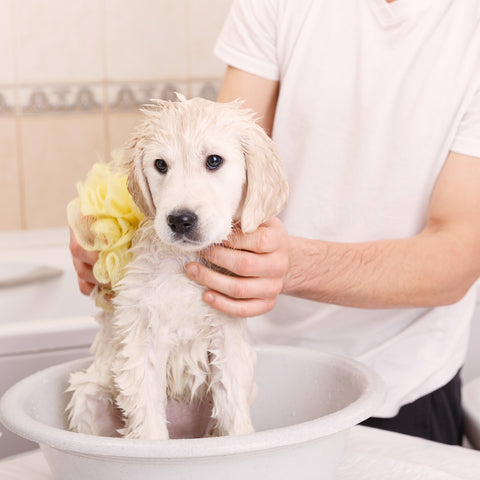 Puppy Bath time - Virtual Gift (Tax Deductible)