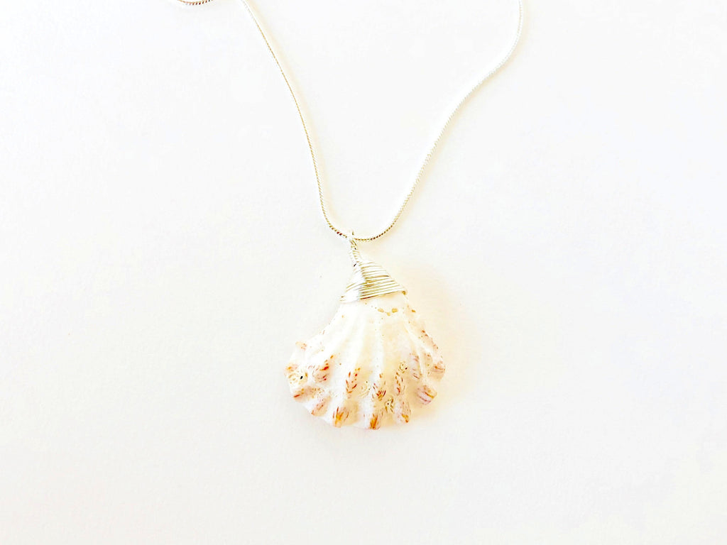 Cat's Paw Sea Shell Necklace