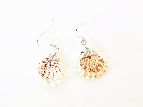 Cat's Paw Shell Earrings